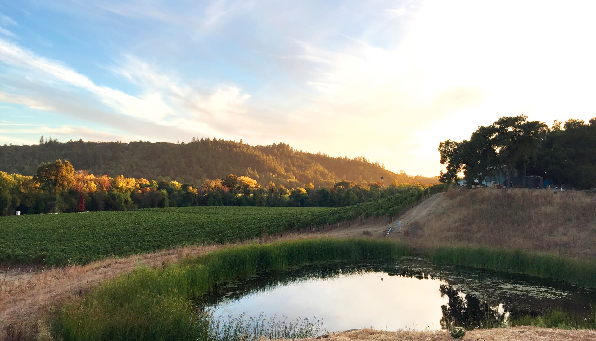 Vokel Cellars Vineyard Pond